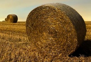 Ackerboden das Gold der Zukunft